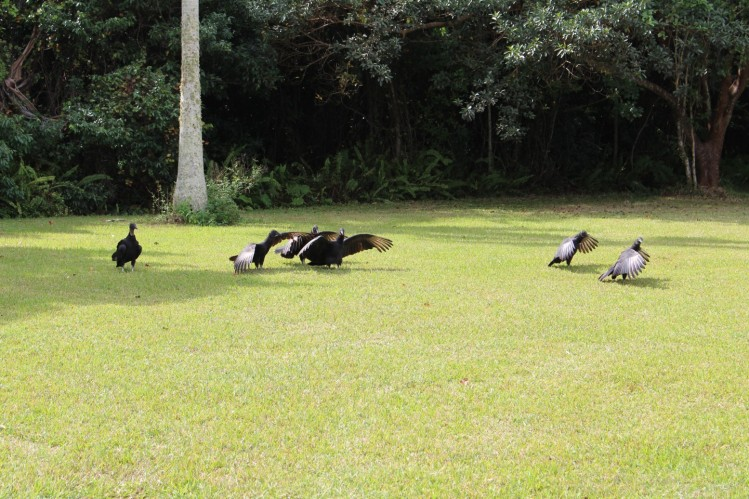 Nearby Vultures