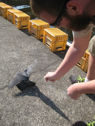 But Tyler also caught a pigeon.
