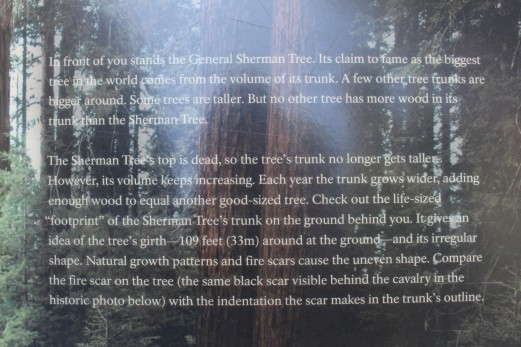And off to see the General Sherman Tree. The thickest tree in the world.