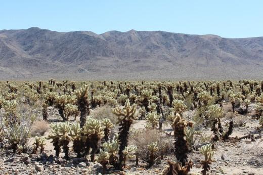 Next stop was the Cactus Garden.