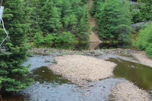 A fair size beaver dam