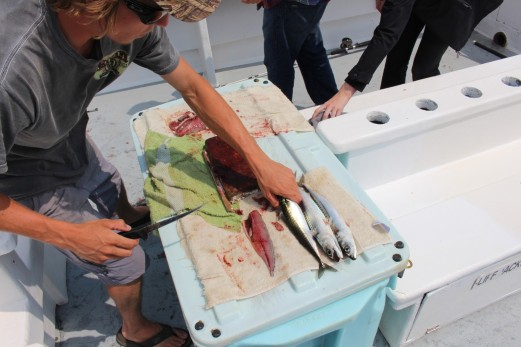 Making bait