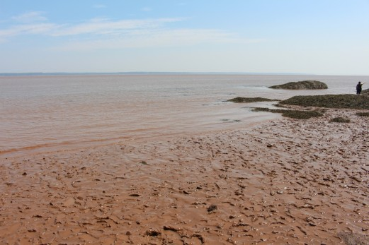 Famous Bay of Fundy mud!
