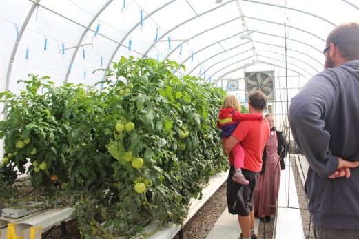 Onsite greenhouses grow most of the veggies for the Colony
